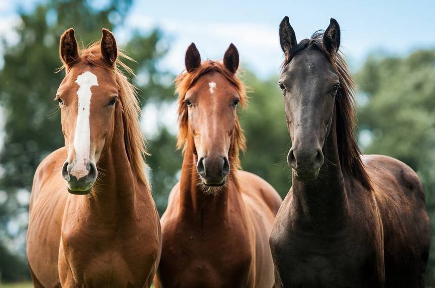 Researchers say horses can recognise human facial expressions