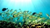 Hawaii to ban certain sunscreens harmful to coral reefs