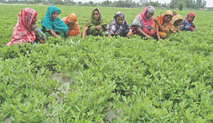 Bumper crop production makes char people happy