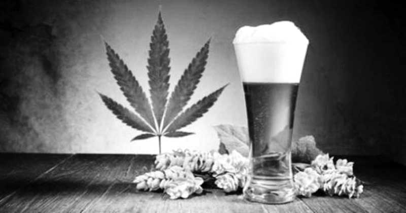 Canada firm aims to tap into pot beverage market with cannabis beer