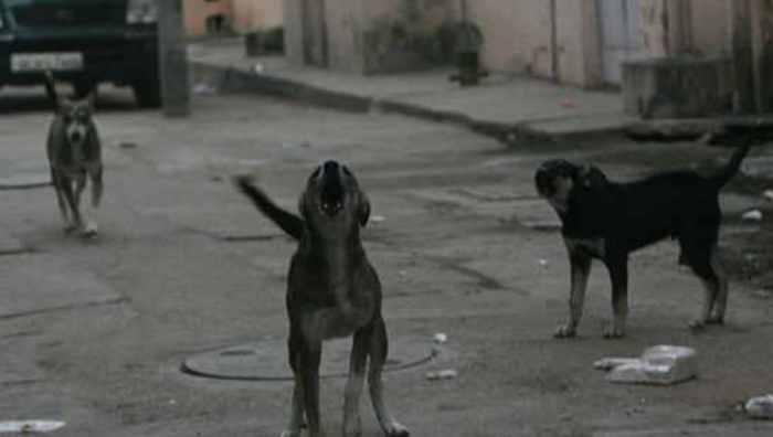 Feral dog packs kill 6 Indian children, terrifying villagers