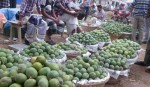 Mango harvesting and selling banned until May 20