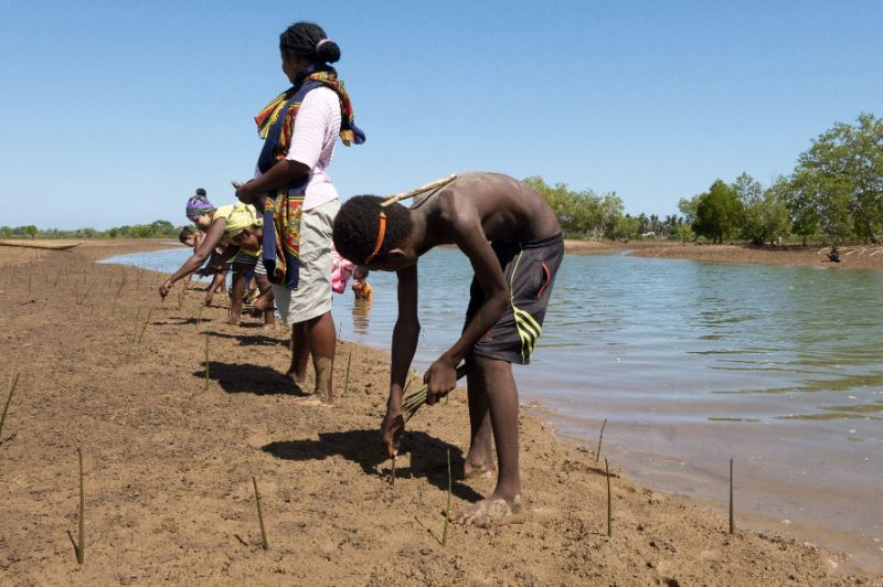 In Madagascar, fishermen plant mangroves for the future