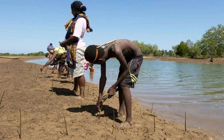 Fishermen plant mangroves for the future in Madagascar