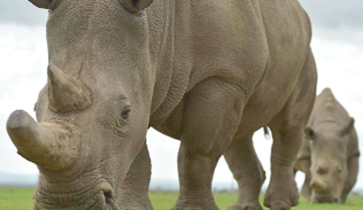 Wildlife poachers in Kenya 'to face death penalty'