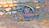 Cozy 'Hood Houses' for stray cats