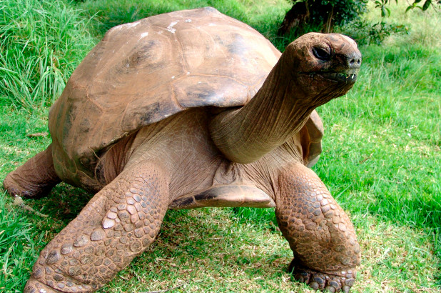 At 186, world's oldest tortoise is still having sex daily