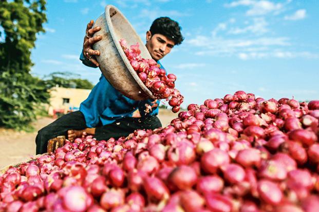 62,673 tonnes onion produced in Rangpur region