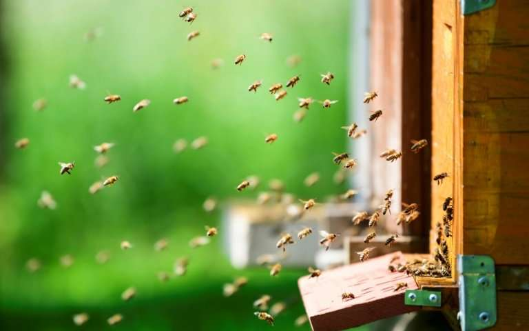 Slovenia, a land with beekeeping in its genes