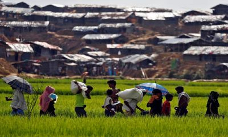 Grass planting reduces soil erosion, risk of landslides in Rohingya camps