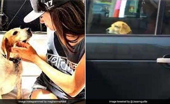 Meghan Markle's dog rides with the Queen and the internet is stoked