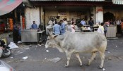 Muslim man beaten to death for 'killing cow' in India