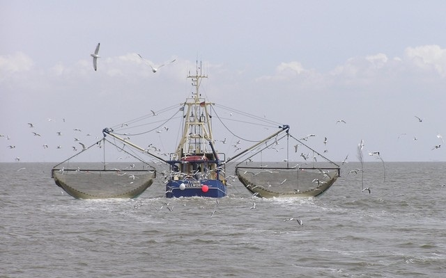 Marine survey vessel so far finds 298 fish species in Bay: Experts