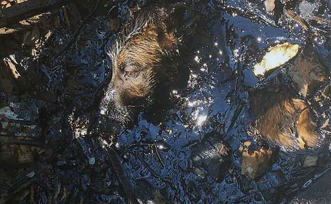 A happy ending for dog who was trapped in tar for two days