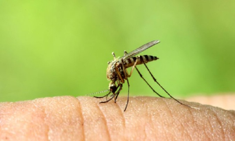 City ready to fight monsoon mosquito menace
