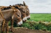 France's 'donkey diplomacy' backfires in Burundi