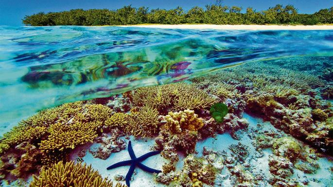 Great Barrier Reef on sixth life in 30,000 years: study