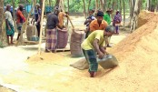 Farmers are busy filling sacks with the just harvested paddy