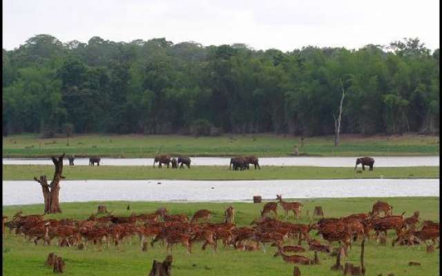 6 top wildlife safaris in India