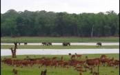 6 top wildlife safaris in India