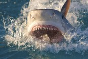 Teenager's penis ripped off by shark while swimming near beach in Brazil