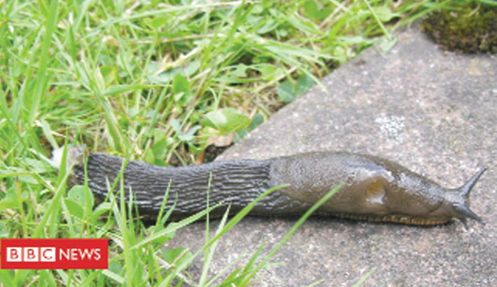 Slug myths to be tested by science
