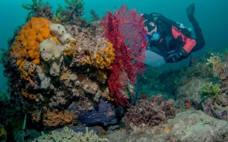 Study warns of alarming decline in Australian fish