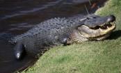 Florida alligator attack: Dog-walker feared dead