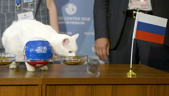 Russia to win first World Cup match, says clairvoyant cat