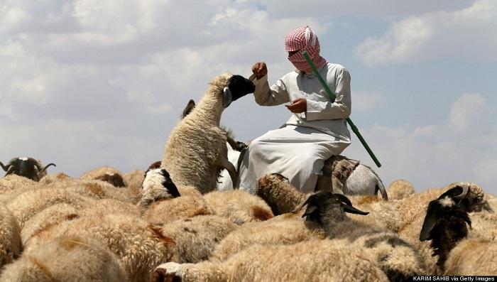 7 shepherds killed as IS 'danger' grips Iraqi desert