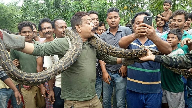 Python selfie puts Indian forest ranger in tight spot (Video)