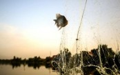 Egypt's shrinking 'Pharaonic Sea' has fishermen worried