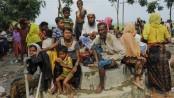 Int'l community urged to step up efforts to help Rohingya