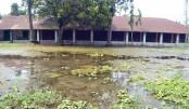 Bogabaid Government Primary School in Sadar upazila