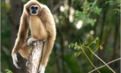 Mystery extinct ape found in ancient Chinese tomb