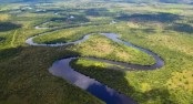 Earth's intact forests vanishing at accelerating pace: scientists