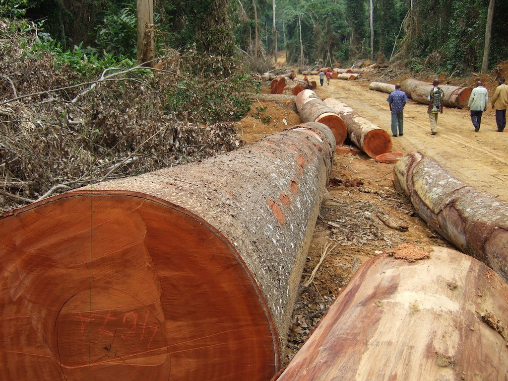 Illegal logging threatens DRC forest, say investigators