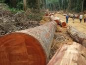 Illegal logging threatens DRC forest, say investigators