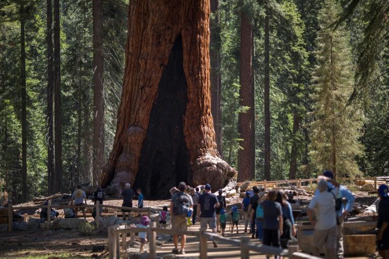 The ancient giants of Yosemite, under a billion stars