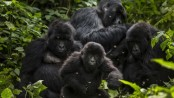 DR Congo: Oil drilling allowed in wildlife parks