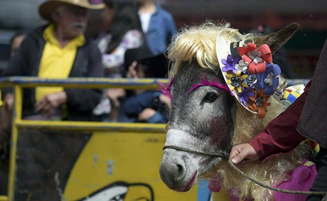Donkey in farmgirl getup wins Colombian pageant