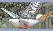 China deploys robotic birds