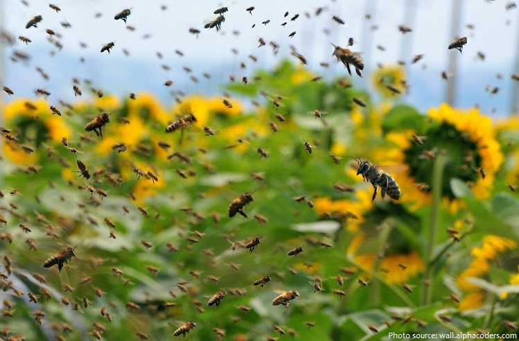 Honeybees finding it harder to eat at America's bee hot spot
