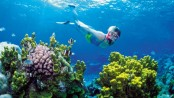 Australia's Great Barrier Reef faces major bleaching threat every two years