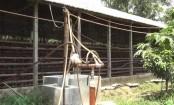Biogas changes lifestyle in Cumilla villages