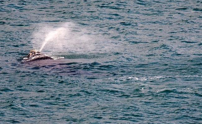 Frolicking whale halts New Zealand fireworks display
