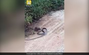 Rrat vs snake battle, can you guess who wins? (Watch)