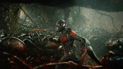 'Ant-Man and Wasp' fly to top of North American box office