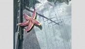Seafood rain  hits China