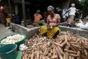 West African states in joint fight against root crop 'Ebola'